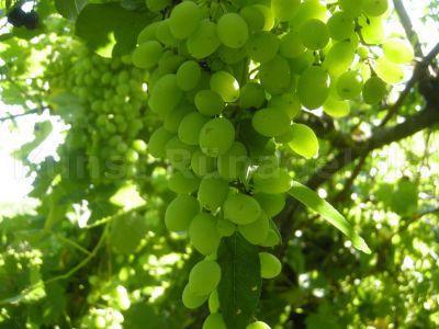 Obst-Wein-in-Sauerkirsche-DSCN6637