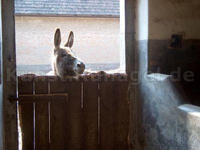 Tiere-Esel-HPIM0799