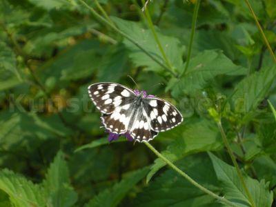 Tiere-Schmetterling-DSCN8711