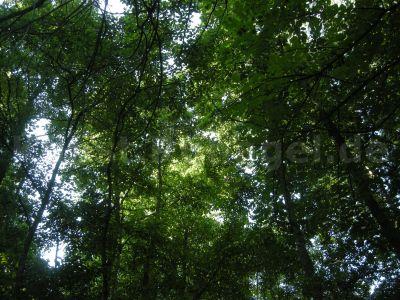 Wald-DSCN0482