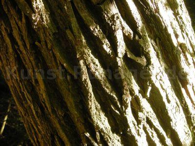 Wald-DSCN0488