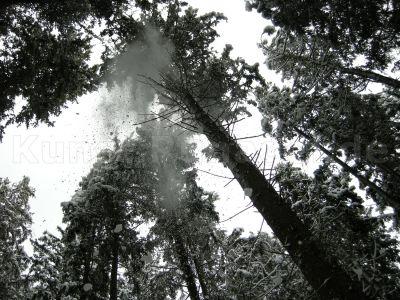 Wald-Schnee-DSCN4021