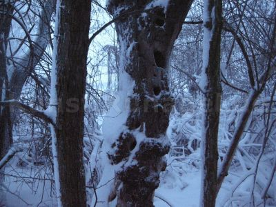 Wald-Winter-DSCN1755